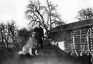 Gerberei + Lederhandlung Max Elmiger 1901