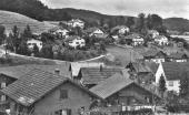 Bifangrain 1955