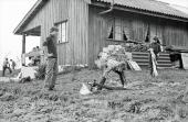 Höferberg Hornusserhütte